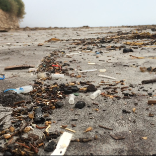 Plastics on the high tide line