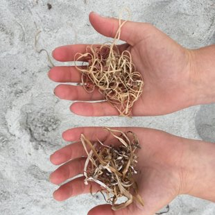 The left hand is sea grass, the right hand is the inside of a golf ball.