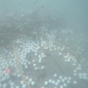The cove is filled with balls